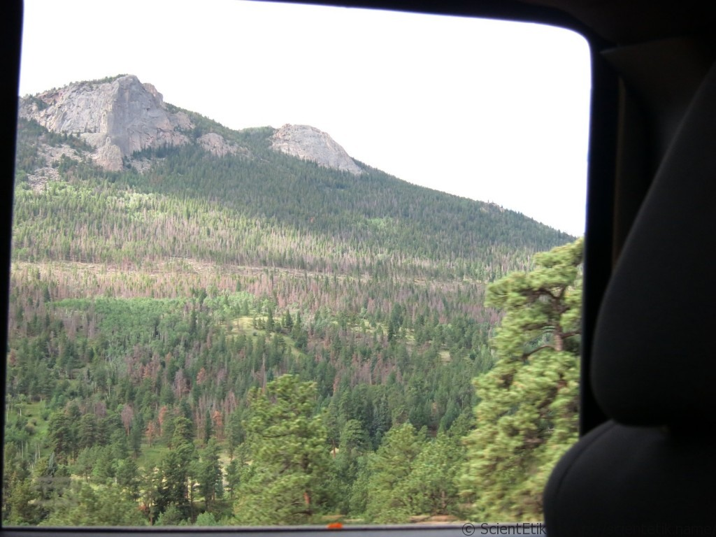 Rocky Mountain National Park forest